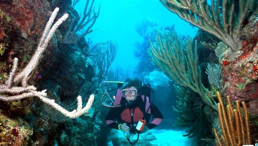 Honduras cuenta con la segunda reserva de arrecifes más grande del mundo