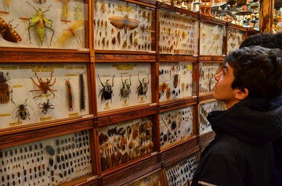 Museo de Entomología