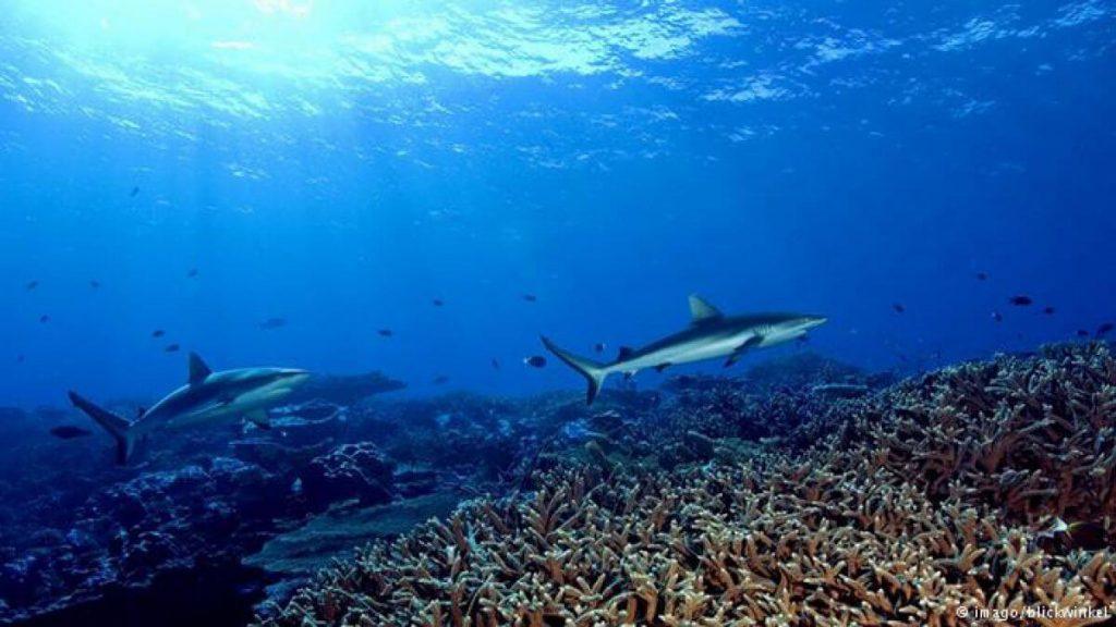 Honduras se unió a la Alianza Global para los Océanos