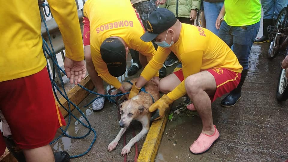 Bomberos de Honduras rescatan a un perro durante el Huracán ETA