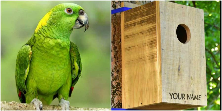 Organizaciones instalan nidos artificiales para aves en Roatán
