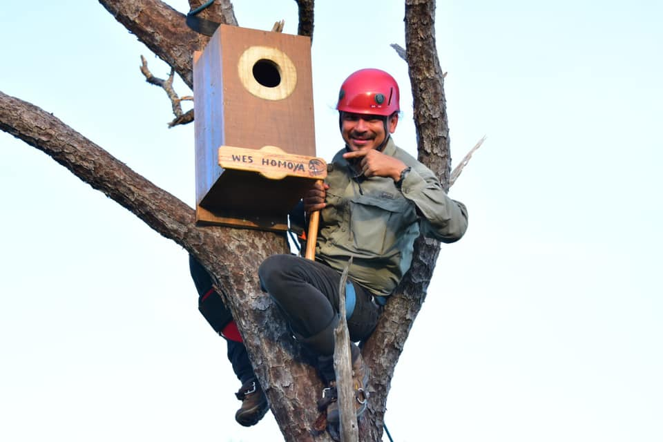 Instalan nidos artificiales en Roatán para preservar especies