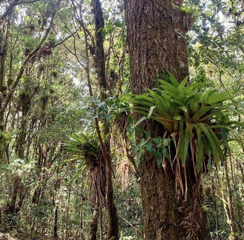 Reserva Biológica Yerba Buena, Francisco Morazán