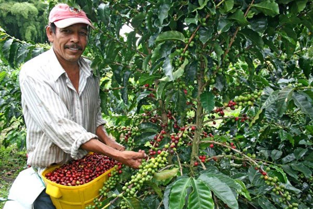 Empresa canadiense visita cafetales de Honduras para exportar