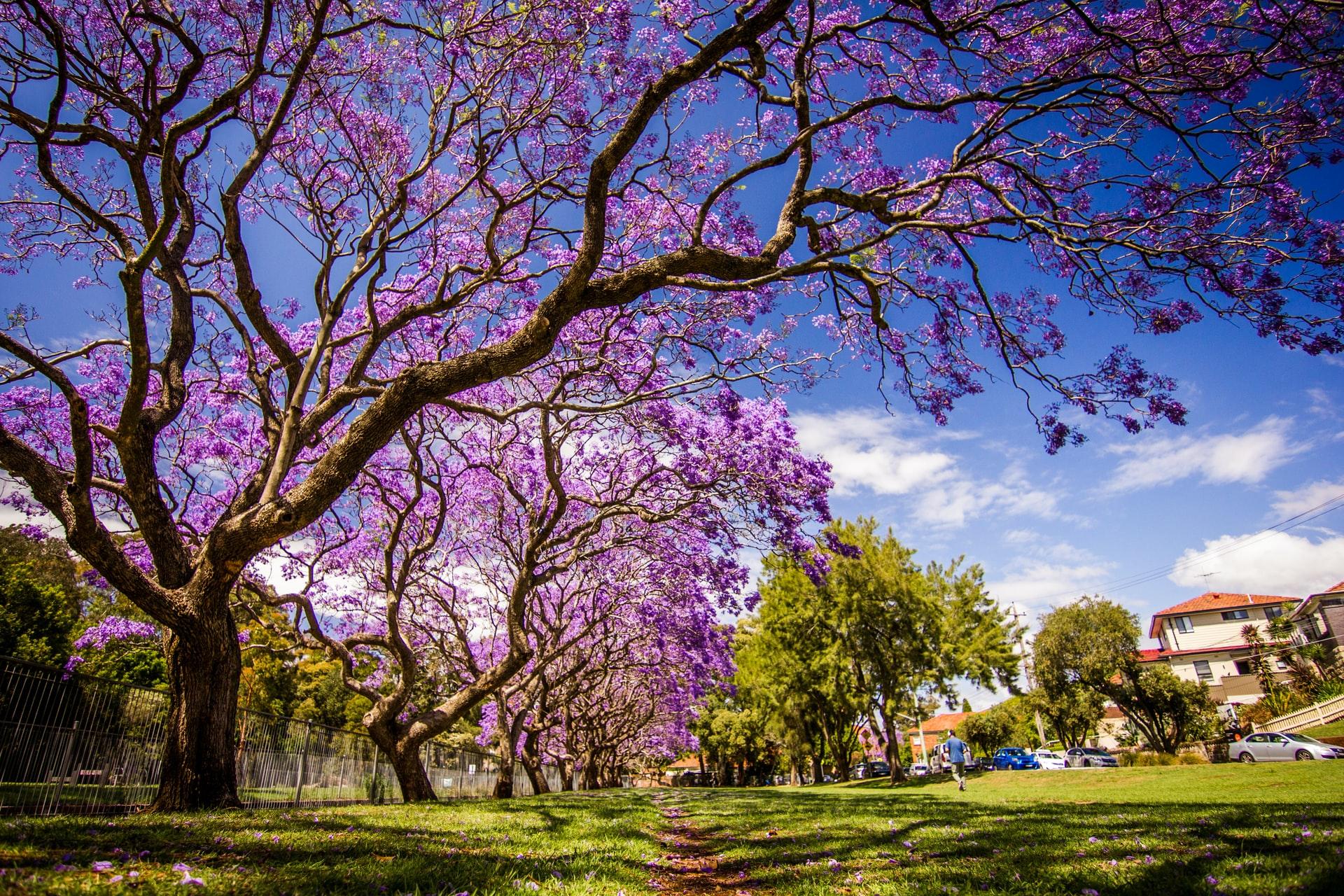 Actividades de Semana Santa en Honduras para este 2021
