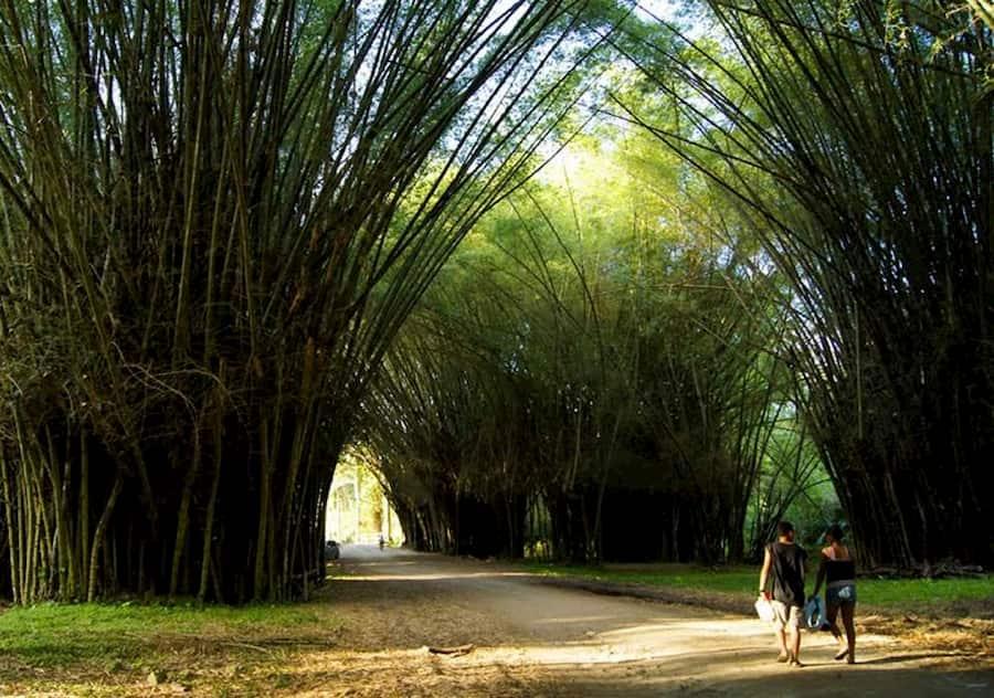 Jardín Botánico Lancetilla, el paraíso natural de Tela