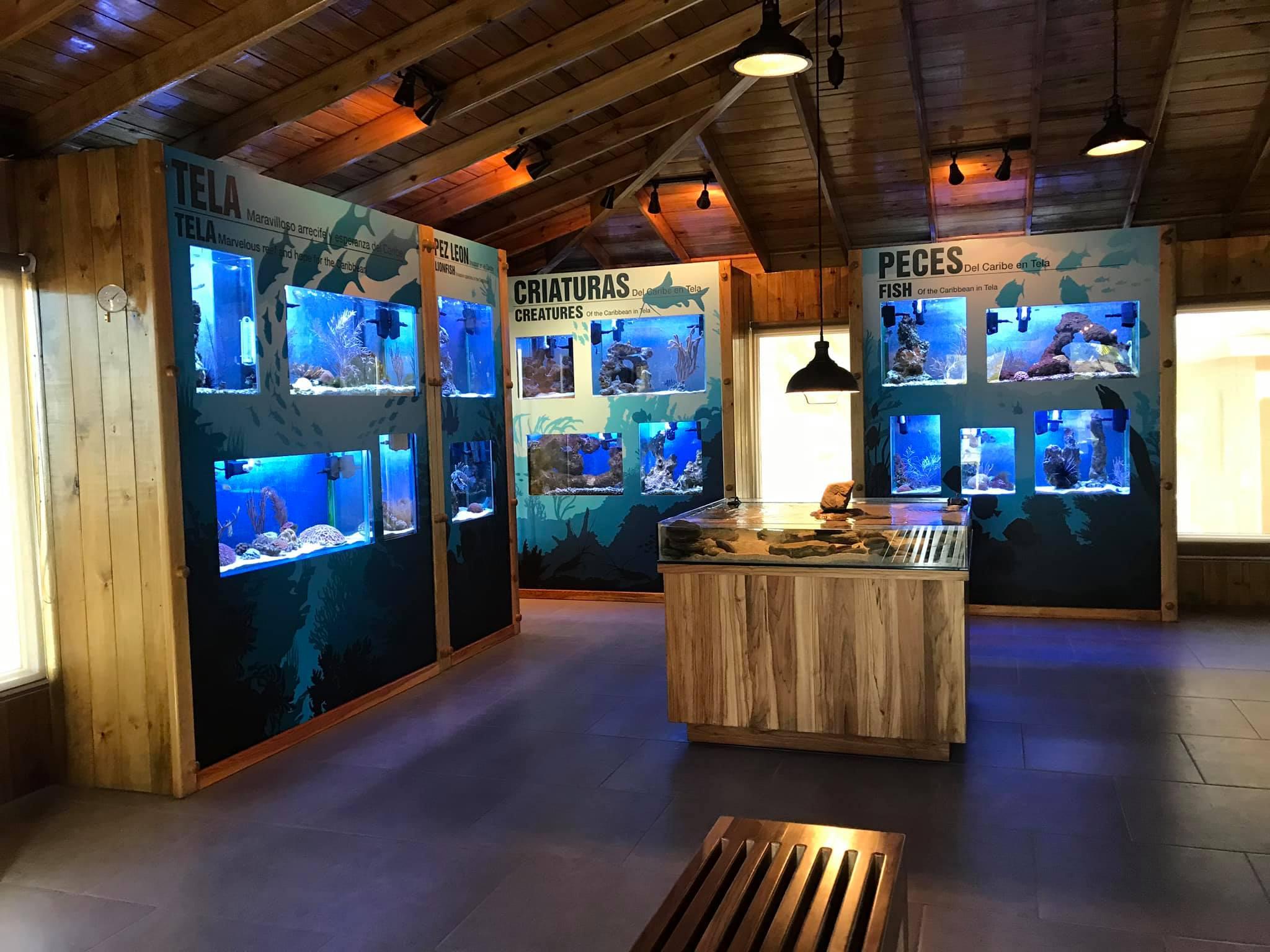 Tela Marine Center, un lugar para disfrutar de la vida marina