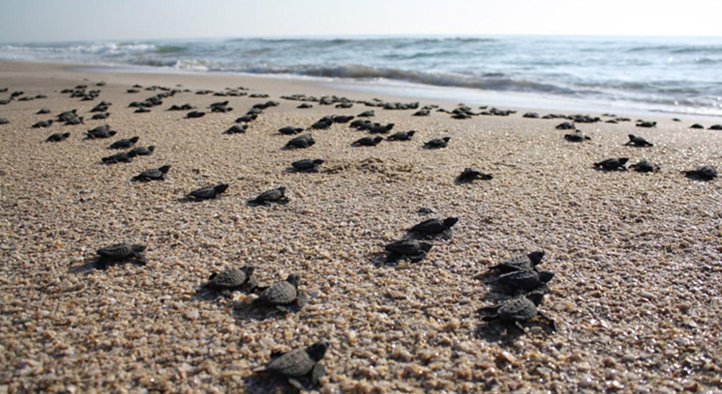 Lugares donde puedes vivir la experiencia de liberar tortugas desde la playa