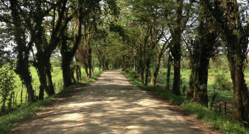 Ruta Trujillo - Tela