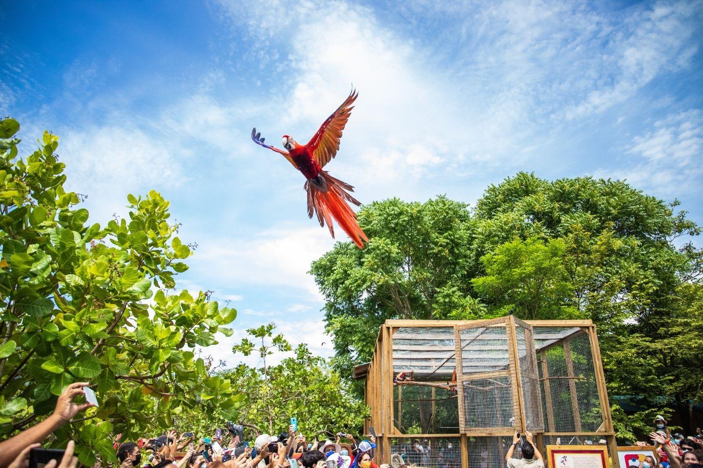 Lanzan campaña de protección de la Guacamaya roja en Honduras