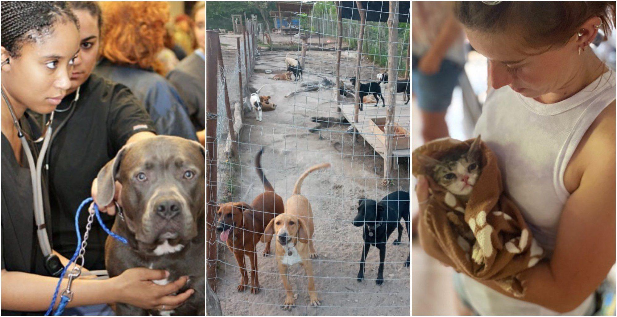 Roatan Rescue busca veterinarios para su causa