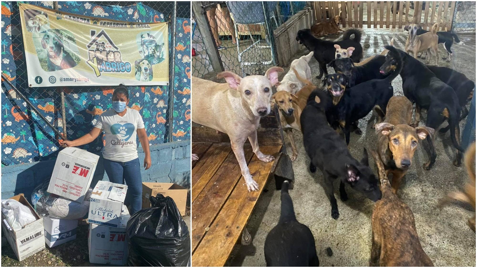 Refugio Amor y Abrigo realizan recolecta para animales de Guanaja