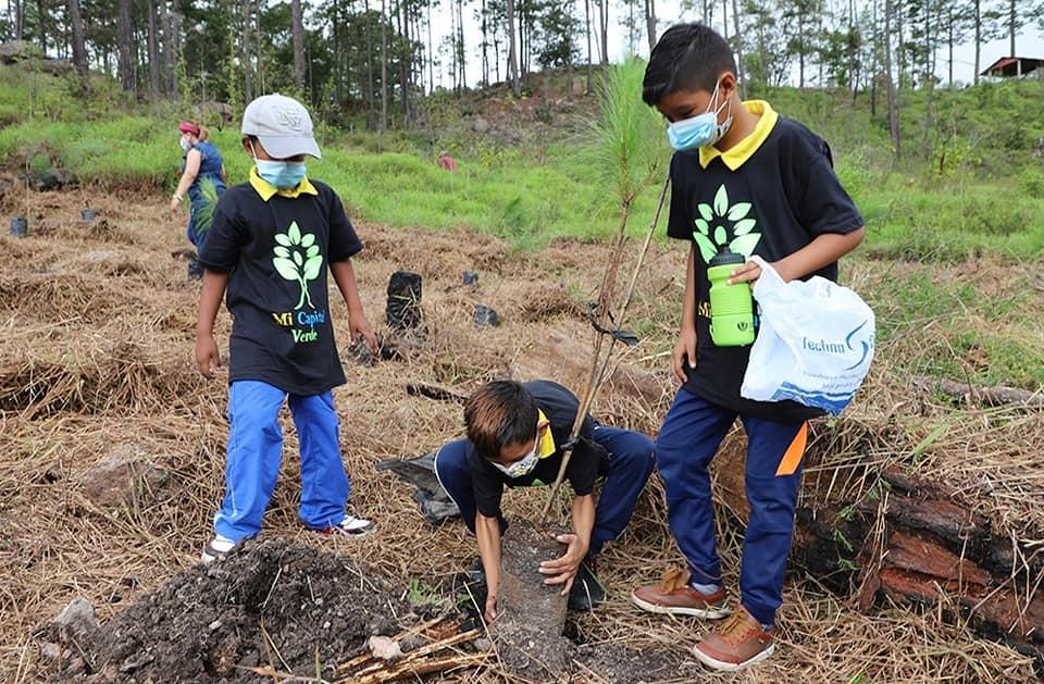 Crean jornada de reforestación en La Tigra con más de 500 pinos